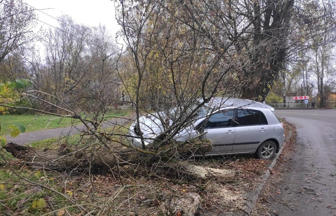 В Тверской области легковушка вылетела на обочину и снесла дерево - новости Афанасий