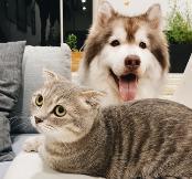 В России начнут идентифицировать всех домашних животных  - новости Афанасий