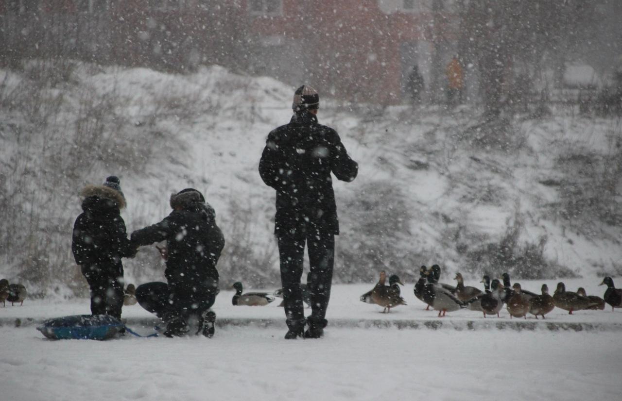 Готовь сани: Тверскую область ожидает снежная неделя