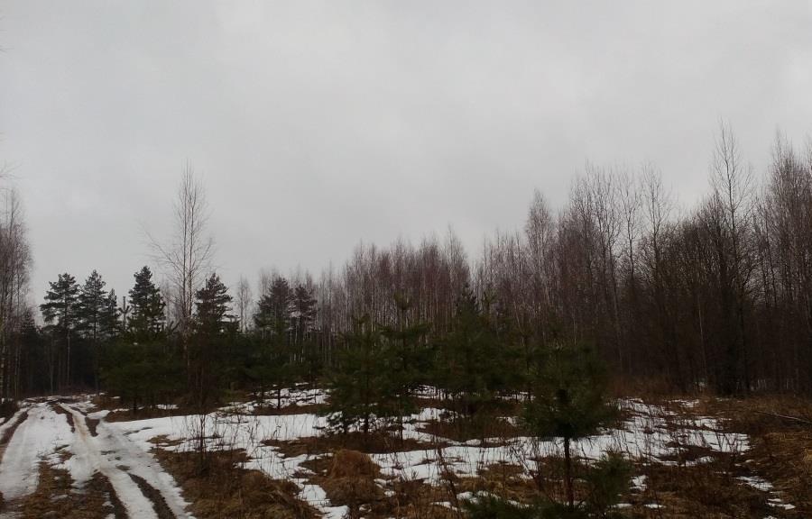 160 гектаров сельхозугодий зарастают в Тверской обалсти - новости Афанасий