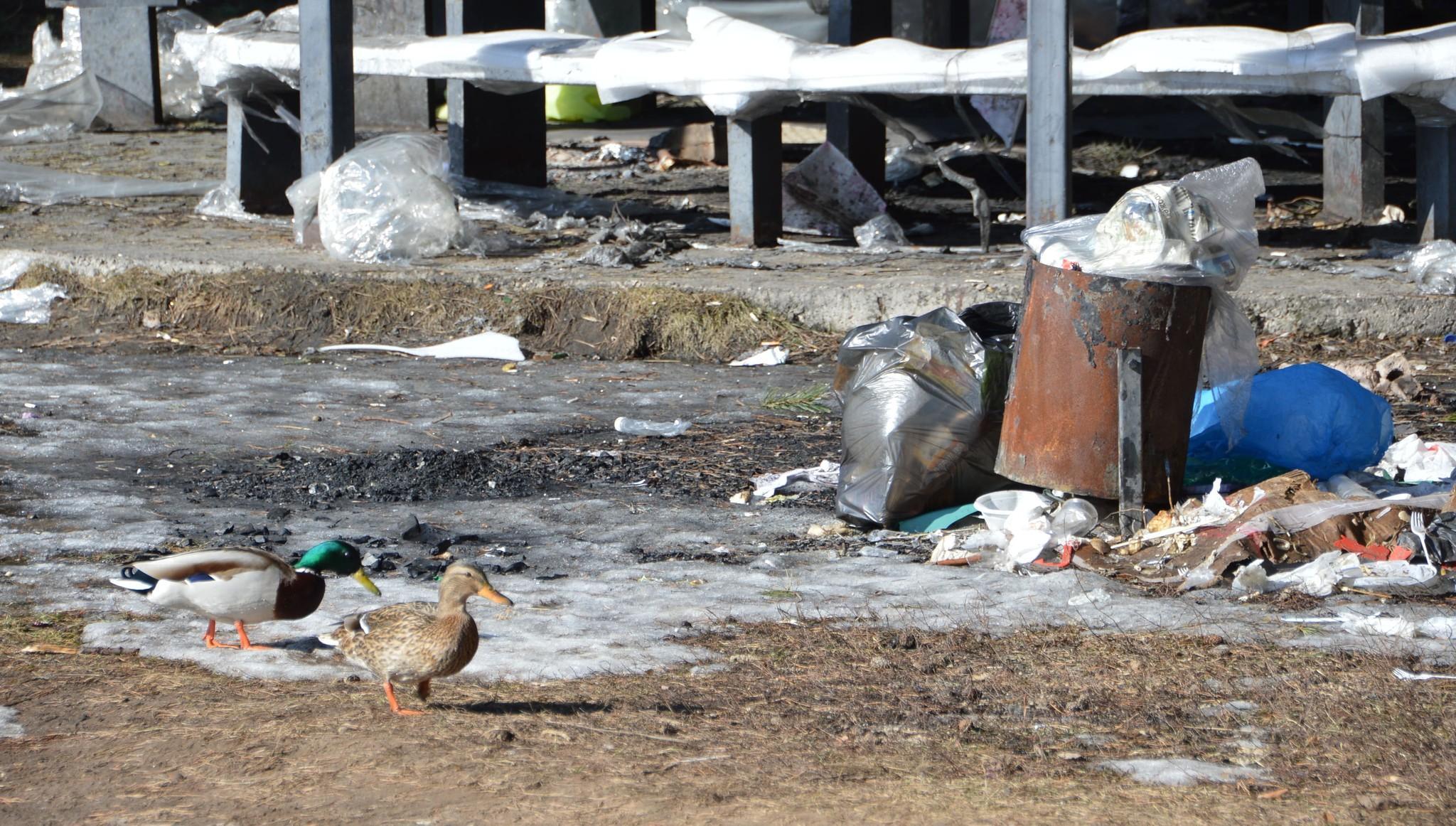 В рощах Твери ищут мусор