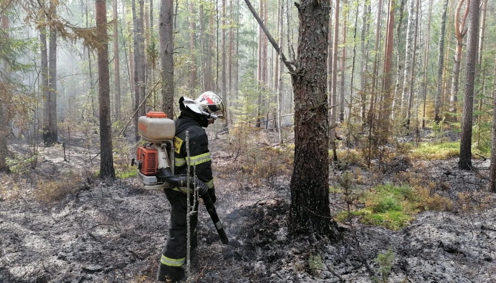 В Тверской области продолжаются природные пожары