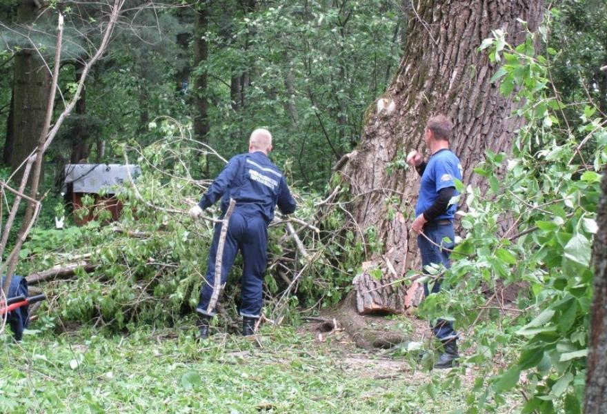 Спасатели помогли Ботаническому саду Твери убрать остатки поваленного ветром тополя