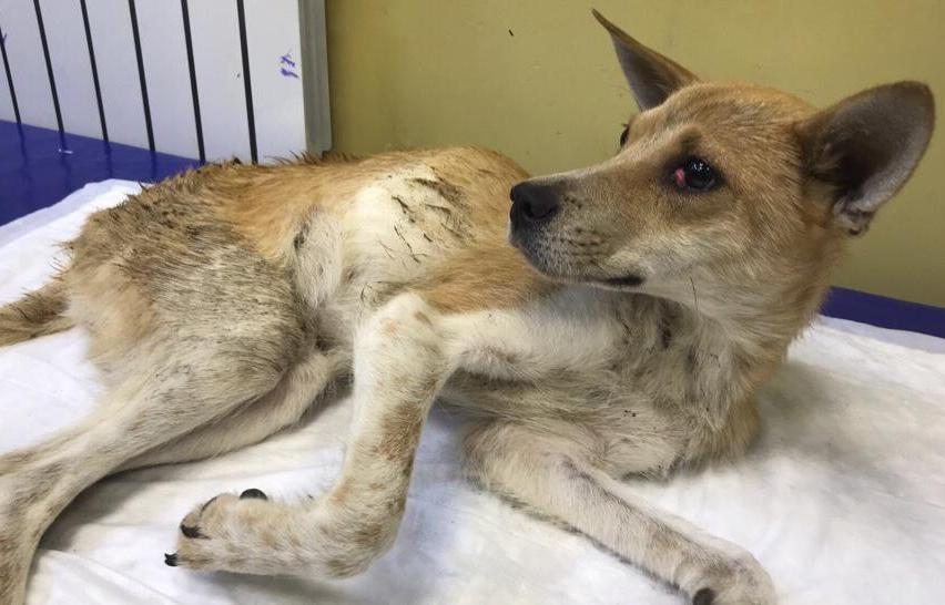 Живодеру, сбросившему собаку с балкона в Тверской области, могут ужесточить наказание - новости Афанасий