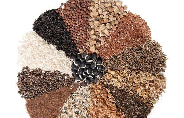 Требования к ввозу семян импортного происхождения на территорию региона - новости Афанасий