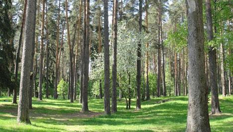 Чиновникам, которые отдали территорию памятника природы «Конаковский бор» под строительство, не удалось доказать свою правоту в суде