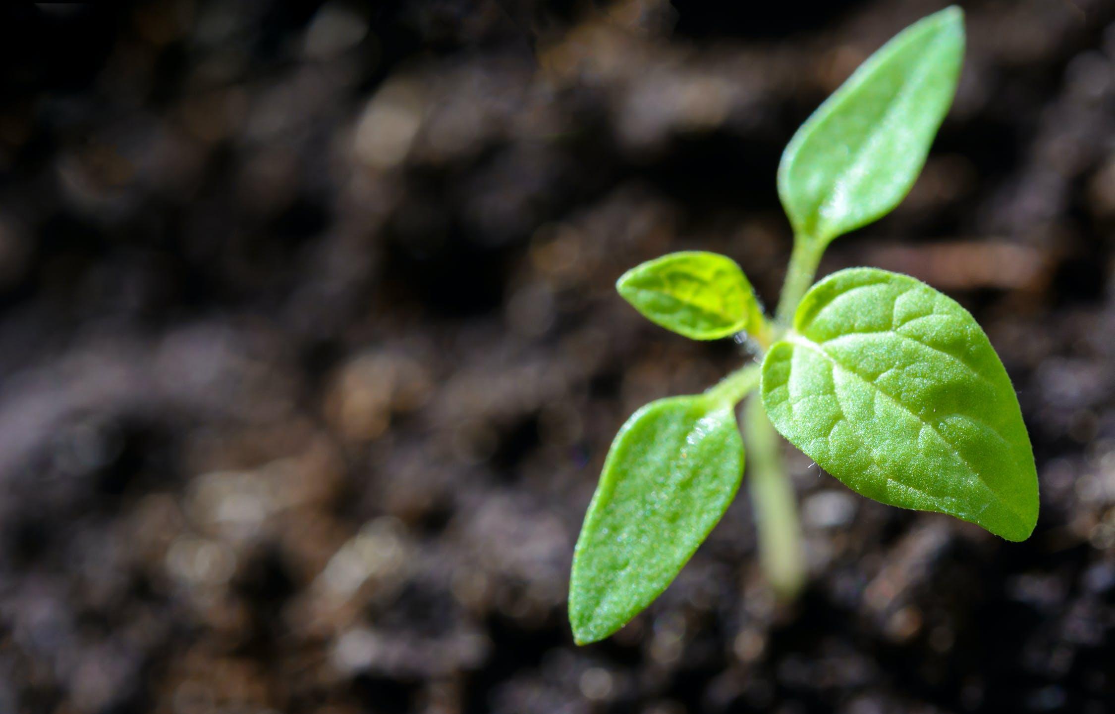 Россельхознадзор подвел итоги фитосанитарного контроля за 2020 год - новости Афанасий