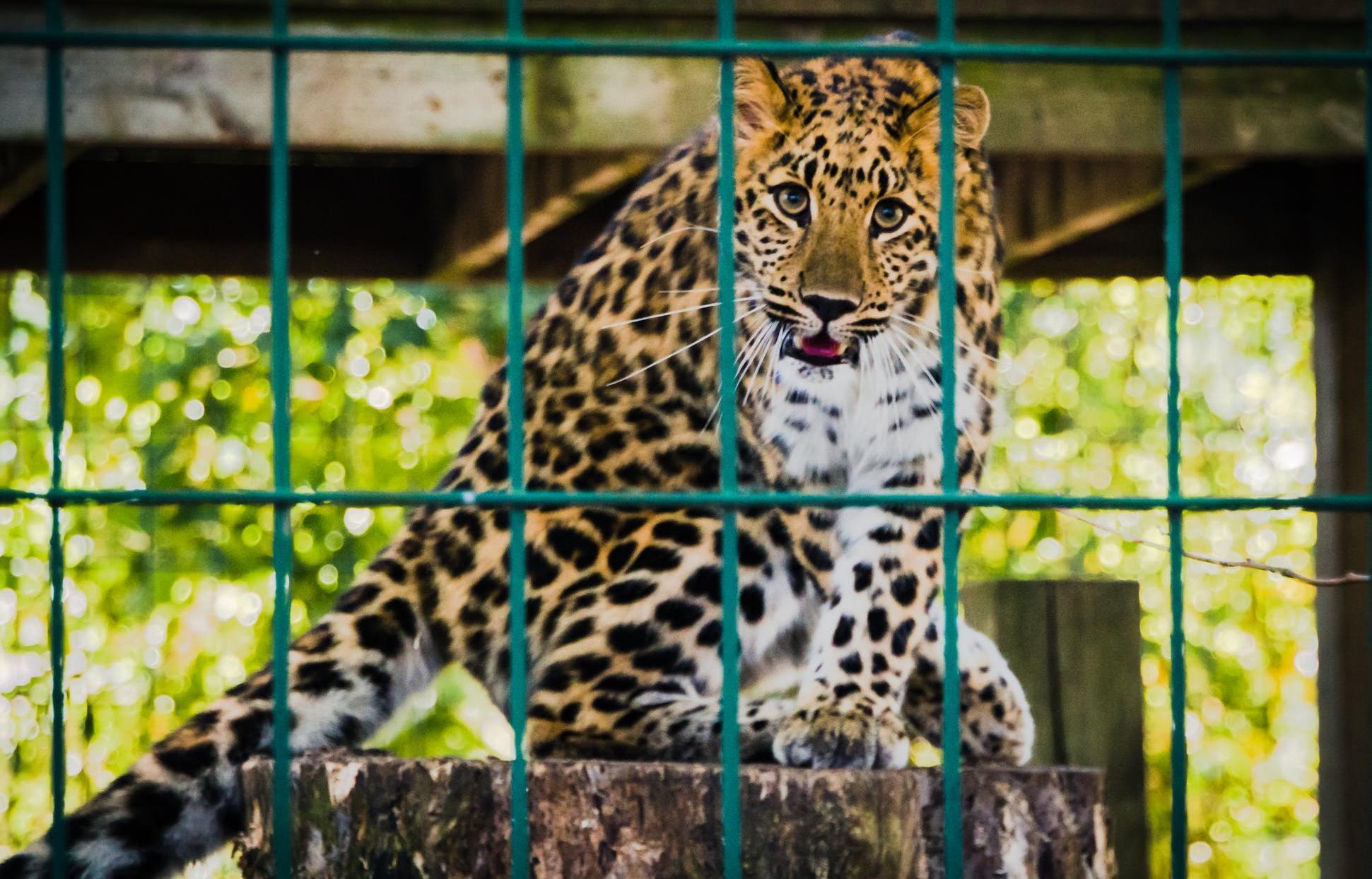 Правительство поддержит частные цирки и зоопарки - новости Афанасий