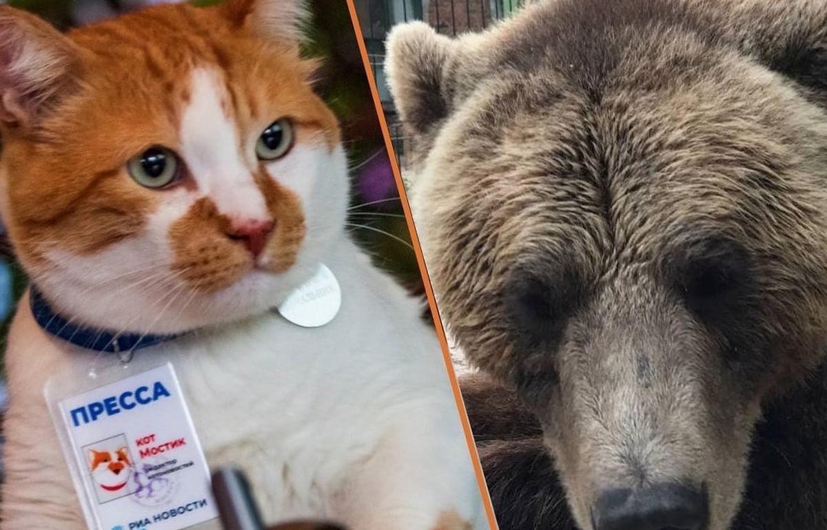Авиамедведь Мансур родом из Тверской области дал интервью крымскому коту Мостику - новости Афанасий