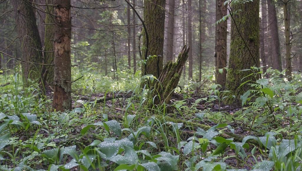40 гектаров лесных земель в Тверской области вернули в собственность государства