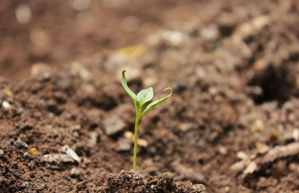 Управление Россельхознадзора по Тверской области подвело итоги выполнения государственного задания по исследованиям почвенных образцов с начала года - новости Афанасий
