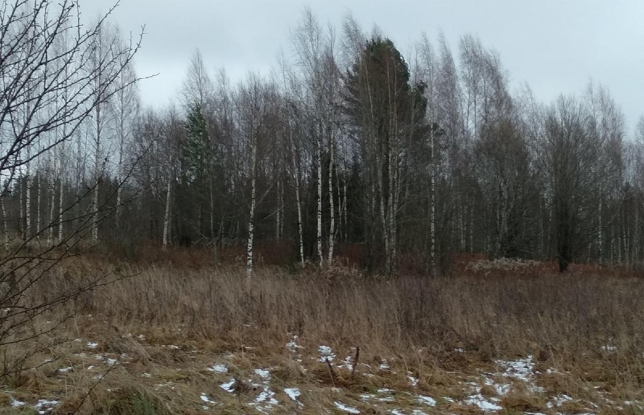 В Кувшиновском районе продолжают зарастать 440 гектаров сельхозугодий - новости Афанасий