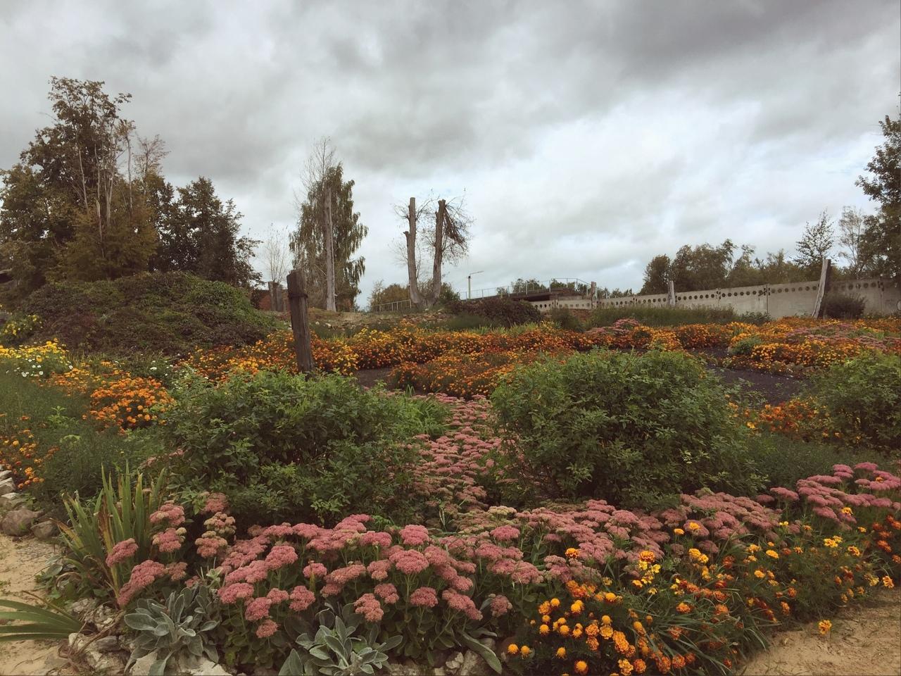 В Кимрах местная жительница разбила цветник на месте заброшенного пустыря - новости Афанасий