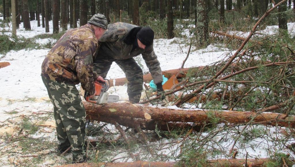 В поселке Тверской области расчищают парк, ставший опасным для прогулок - новости Афанасий