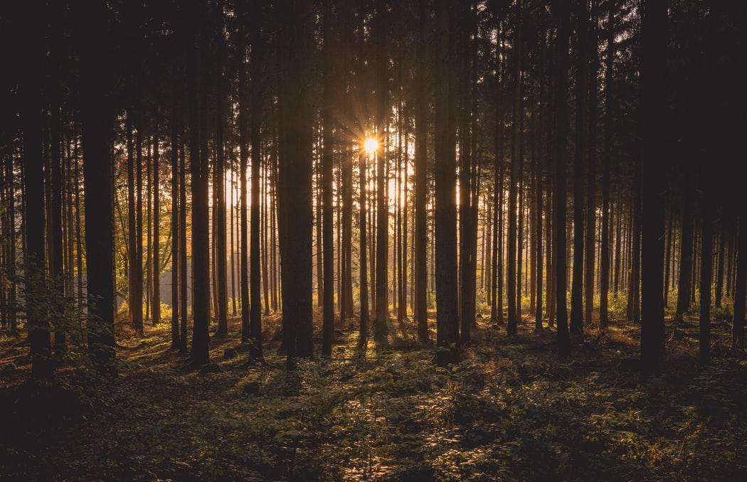 В Тверской области пожароопасный период продлили до конца октября - новости Афанасий
