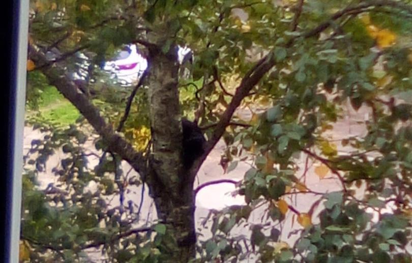 В Твери спасли кота, который двое суток провел на дереве - новости Афанасий