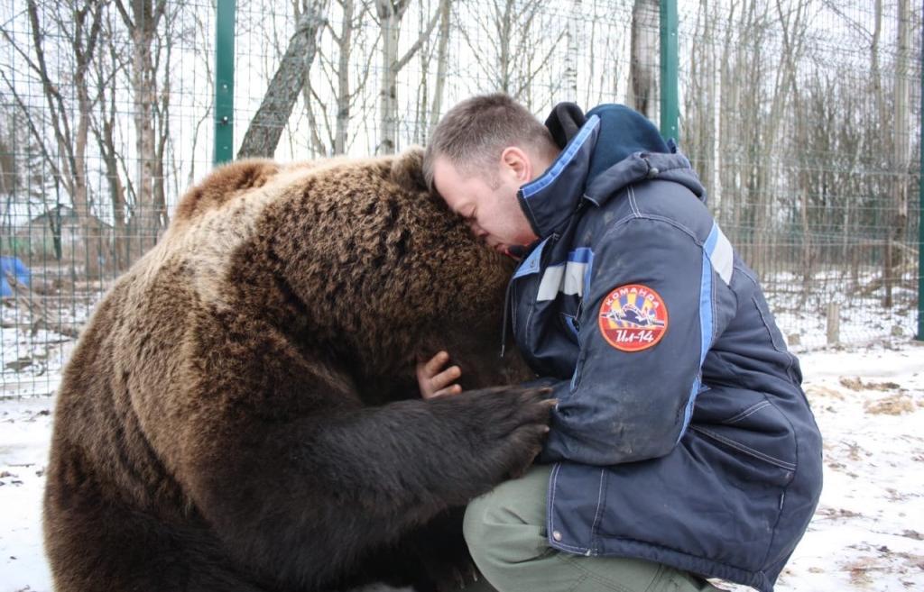 Авиамедведь Мансур из Тверской области стал звездой YouTube - новости Афанасий