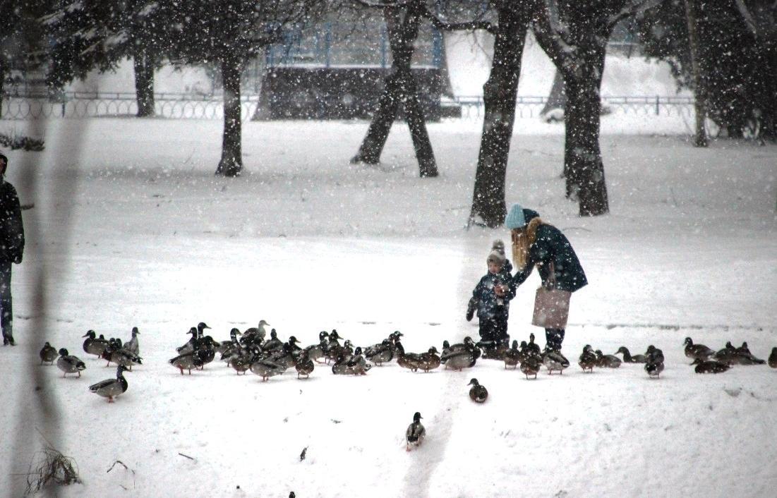 В начале декабря в Тверской области похолодает