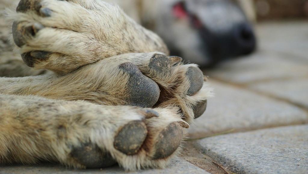 В Тверской области будут судить мужчину, застрелившего собаку на глазах у ребенка - новости Афанасий