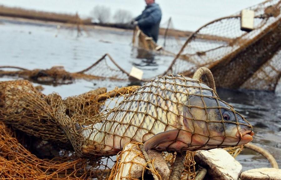 Два браконьера в Тверской области выловили 200 голов рыбы и пытались дать взятку инспектору Росрыболовства - новости Афанасий