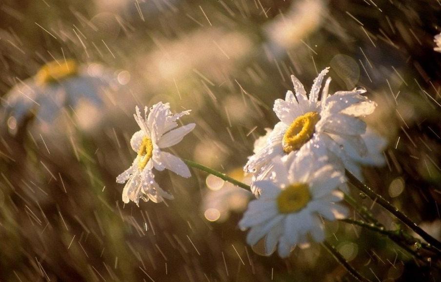 С запада на Тверскую область надвигаются гроза и дождь с градом