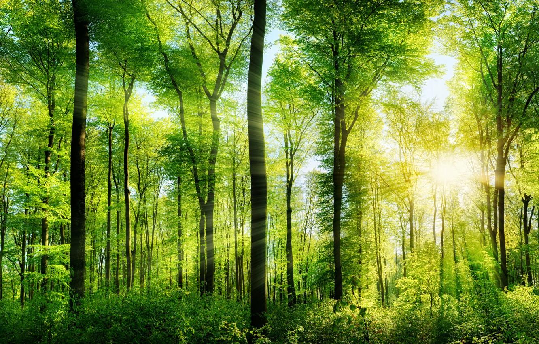 Предприятие по заготовке древесины не обследовало арендуемый лес и ответит за это - новости Афанасий