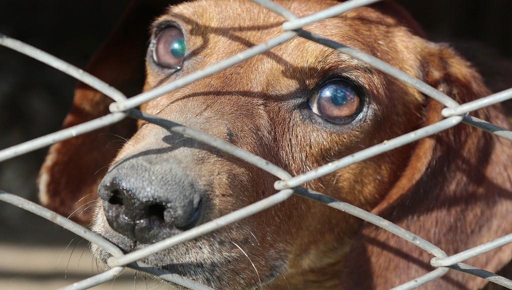 В России предлагают ввести конфискацию животных у жестоких владельцев - новости Афанасий