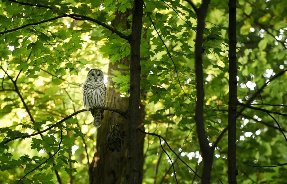 В Тверской области лес стали вырубать еще быстрее - новости Афанасий