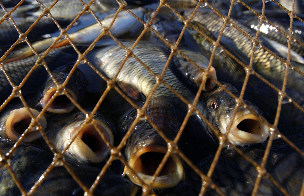 Жителя Тверской области отправили в колонию за браконьерство - новости Афанасий