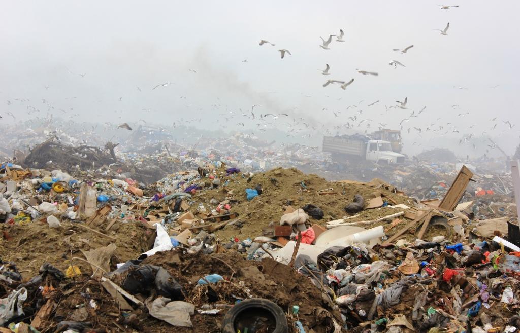 Генеральная уборка: как в Нелидово старую свалку будут рекультивировать по новым технологиям - новости Афанасий