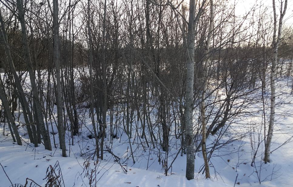 В Калининском районе собственник не устранил зарастание 6 га сельхозугодий - новости Афанасий