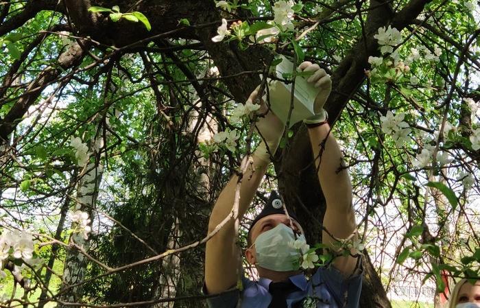 В парке Победы в Твери установили феромонные ловушки - новости Афанасий
