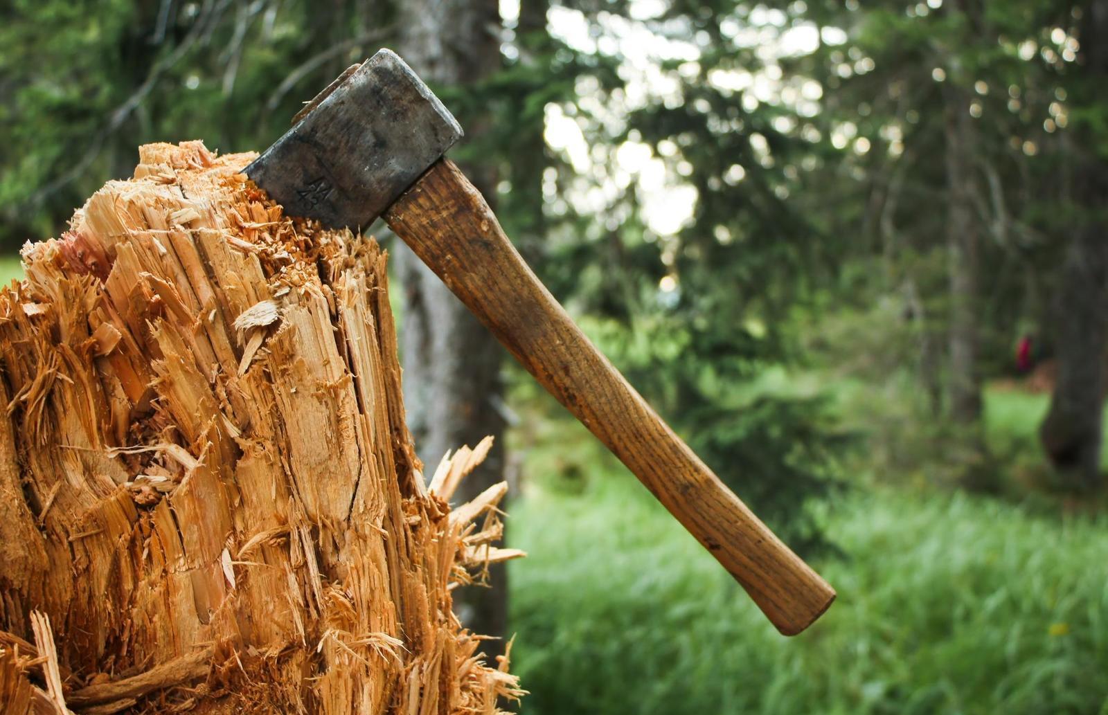 В Тверской области возбудили дело о масштабной незаконной рубке леса  - новости Афанасий