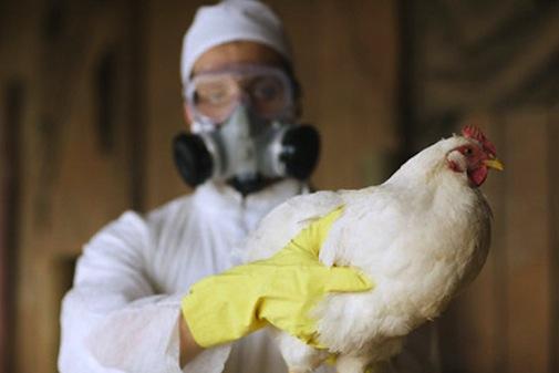 Птичий грипп зарегистрирован в одном из регионов России - новости Афанасий
