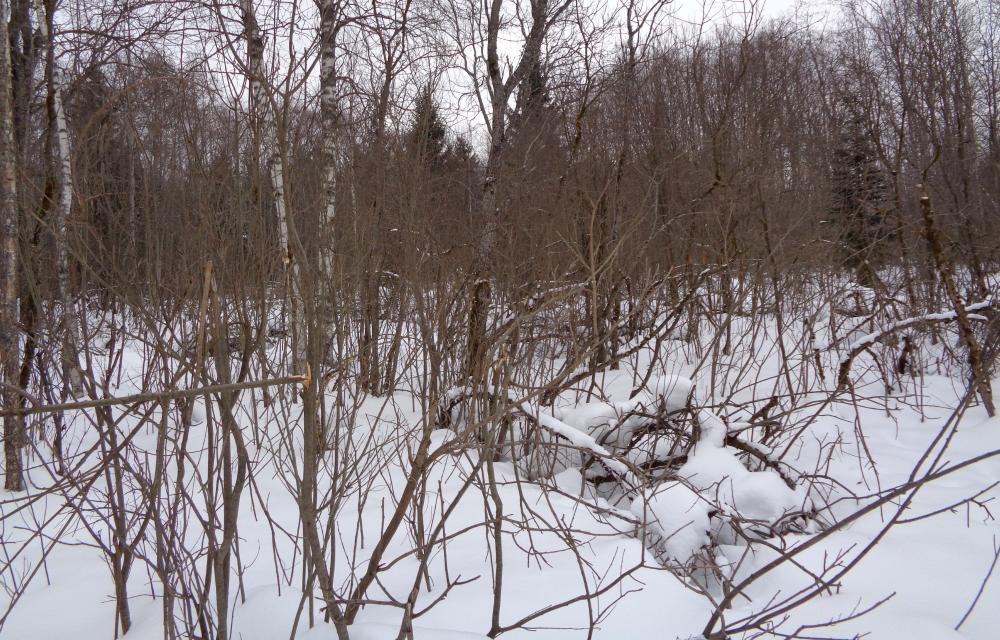 Землевладелец предостережён о зарастании 216 гектаров сельскохозяйственных угодий в Жарковском районе - новости Афанасий
