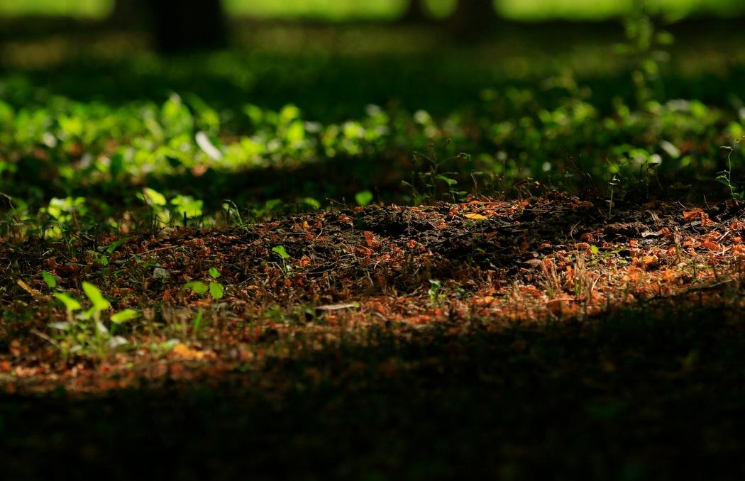 Россельхознадзор проверил тверские почвы на загрязненность - новости Афанасий