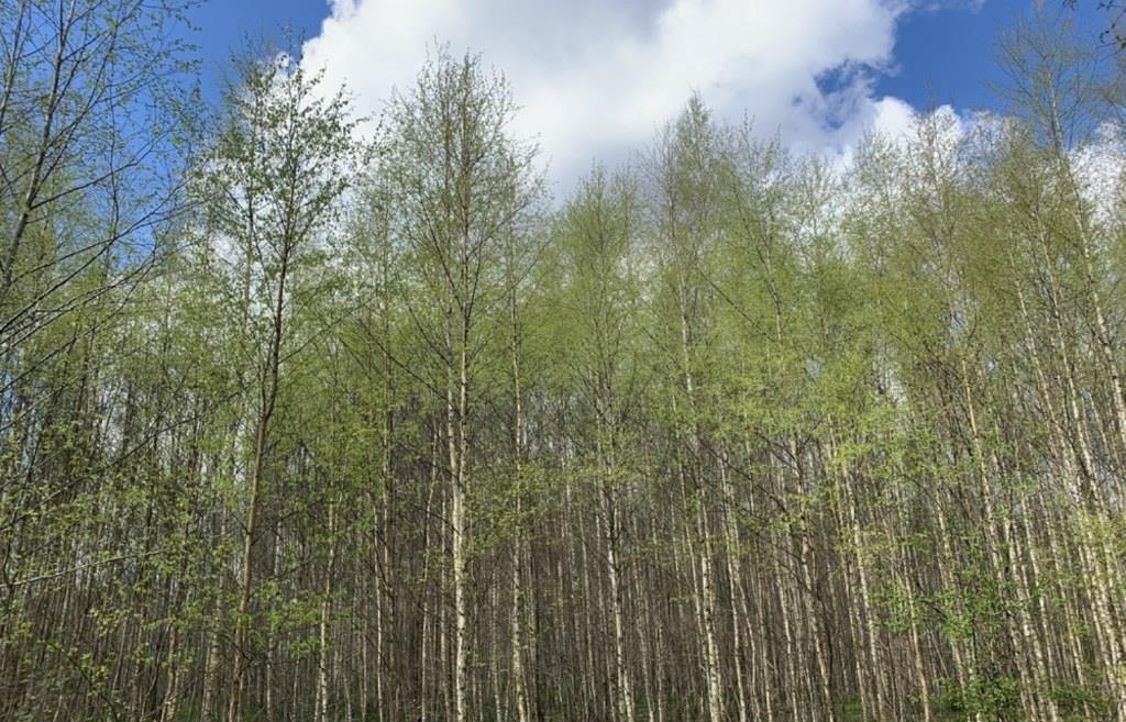 Более 34 гектаров сельхозземли зарастает в Старицком районе - новости Афанасий