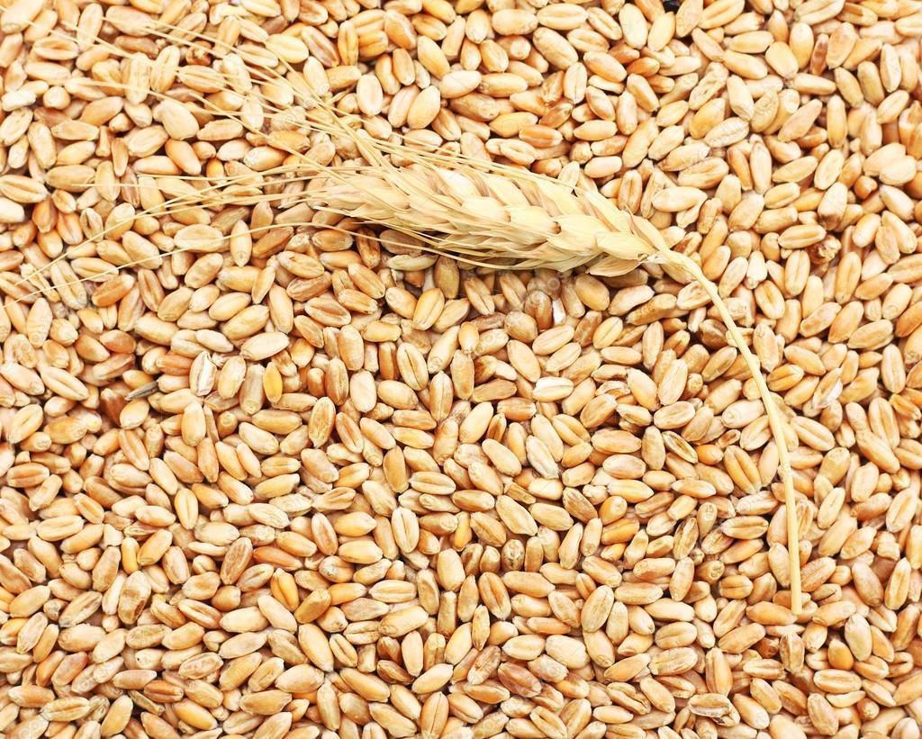 В России появился новый ГОСТ на пшеницу - новости Афанасий