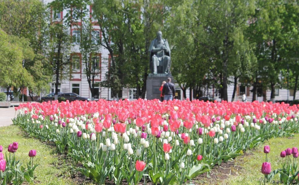 В Твери на 3,5 тысячах квадратных метров высадят цветники
