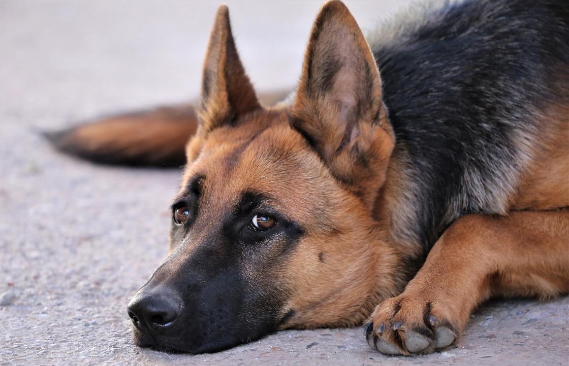 В Твери живодера, убившего собаку, оставили на свободе - новости Афанасий