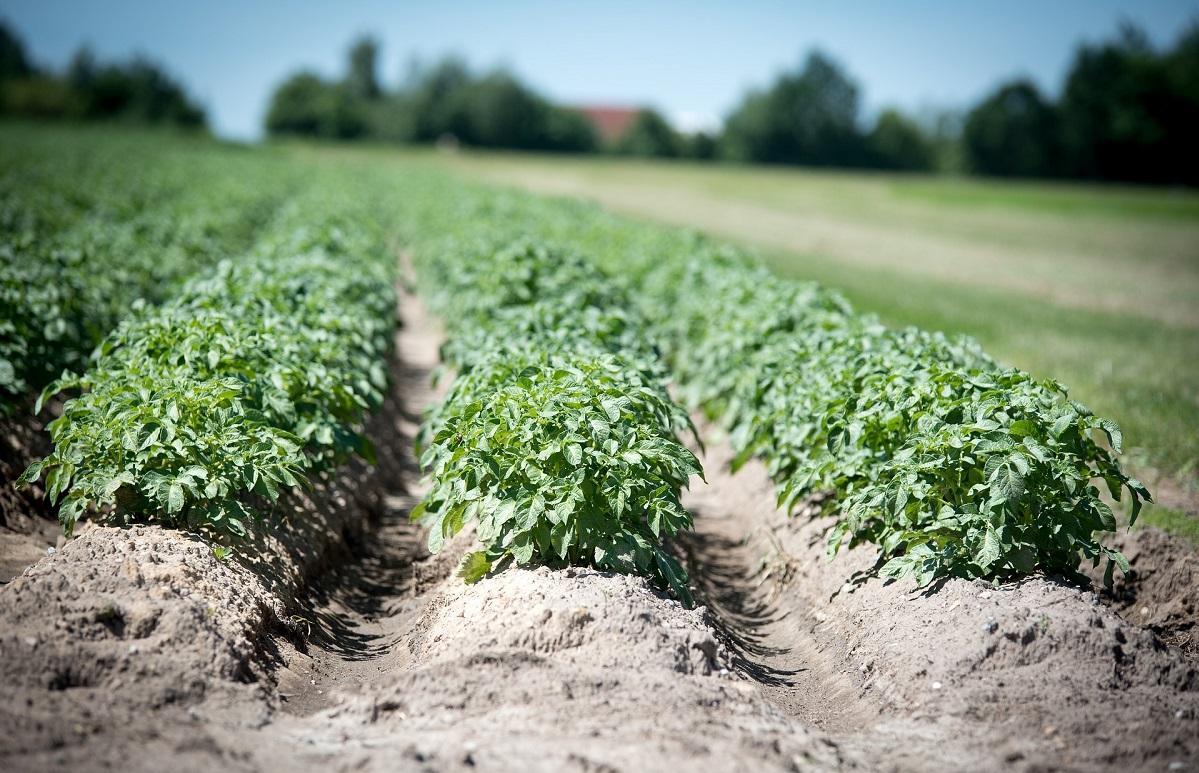 На полях молоковских фермеров не нашли нарушений - новости Афанасий