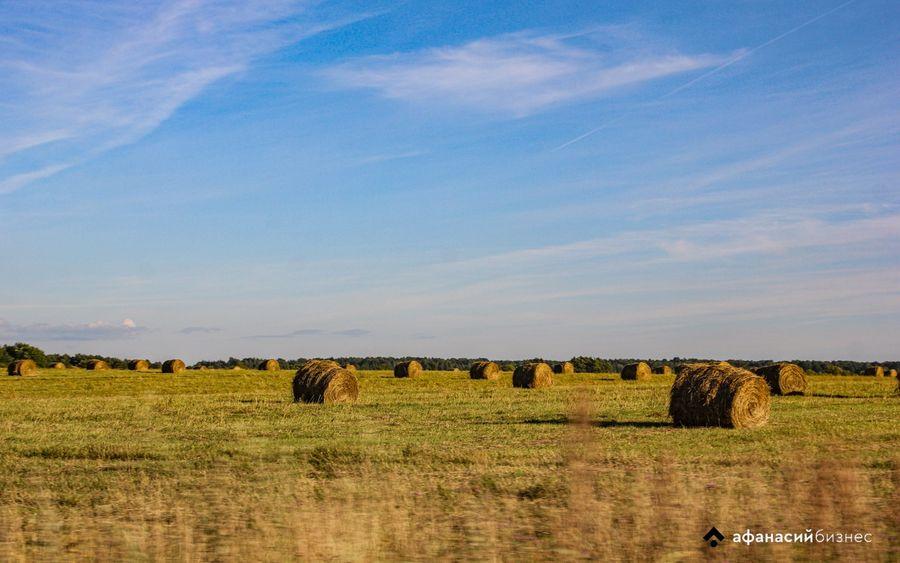 Гражданина Латвии лишили права на землю в Тверской области - новости Афанасий