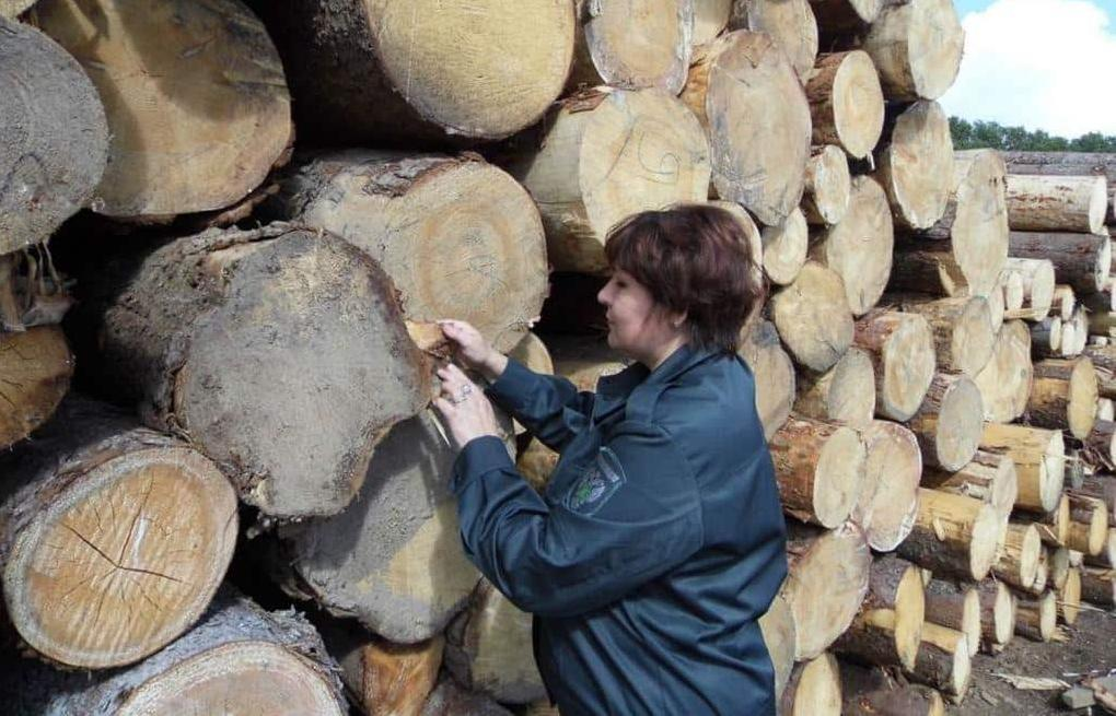 В Весьегонском районе проведен фитосанитарный мониторинг в лесном питомнике и на лесопереработке - новости Афанасий
