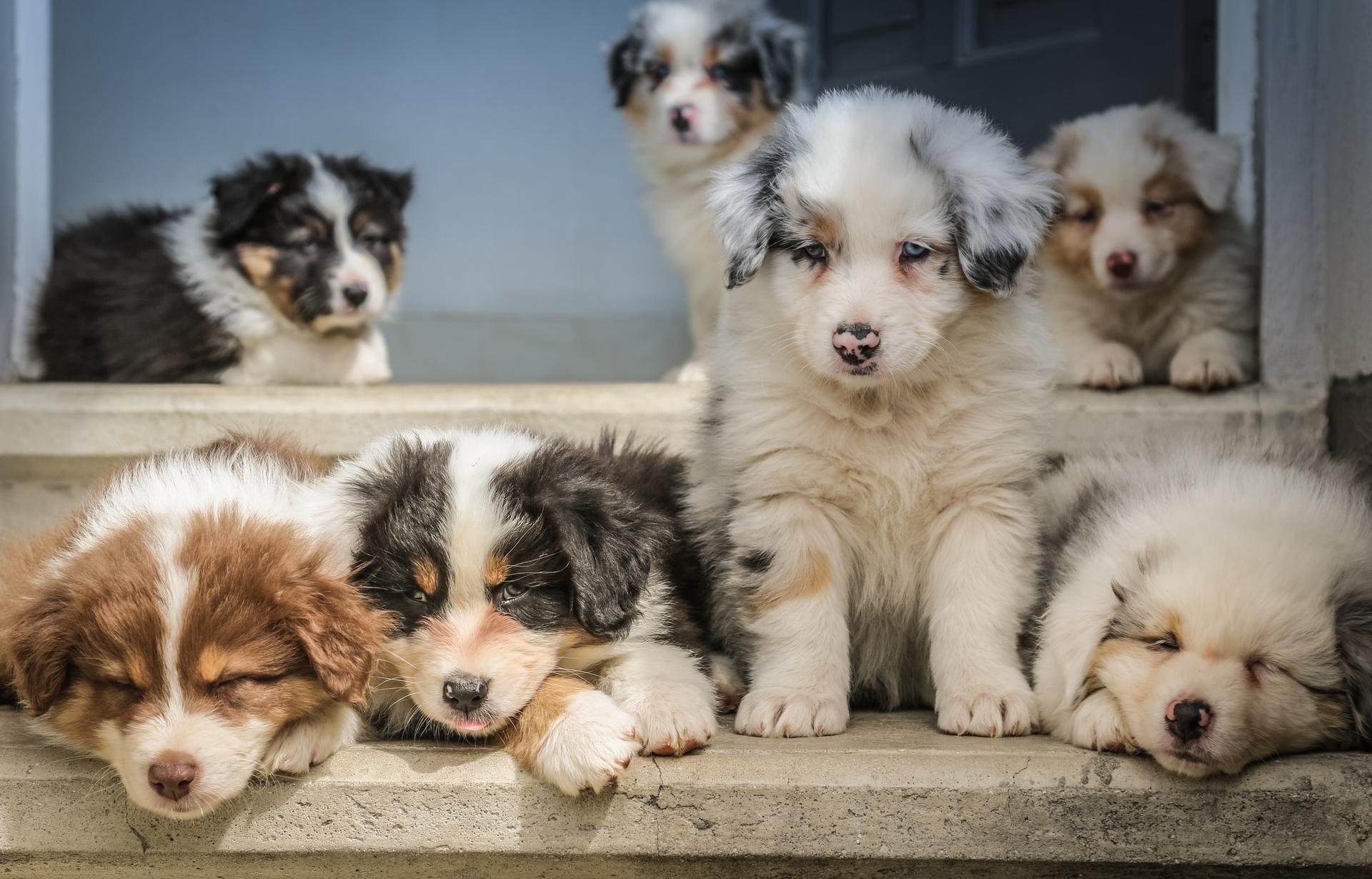 В России готовится запрет на продажу животных в зоомагазинах и на рынках - новости Афанасий