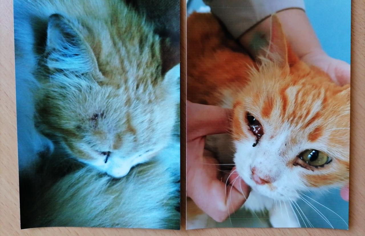 В Тверской области соседи избили кота, который гадил в подъезде - полиция не стала возбуждать дело - новости Афанасий
