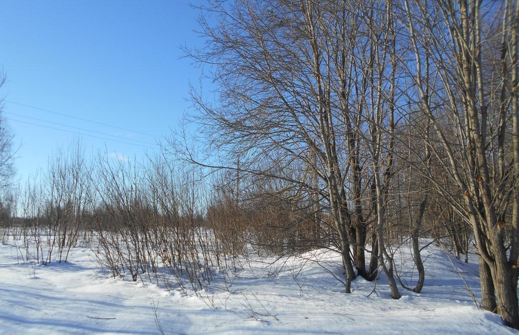 В Торжокском районе не устранено зарастание свыше 80 гектаров сельскохозяйственных угодий - новости Афанасий
