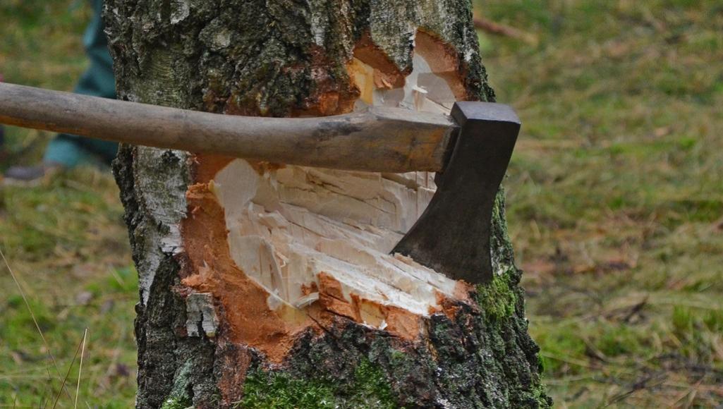 В Тверской области осудили отца шестерых детей, повалившего дерево на коллегу - новости Афанасий