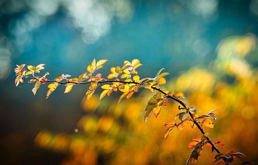 В Тверской области сохранится теплая погода