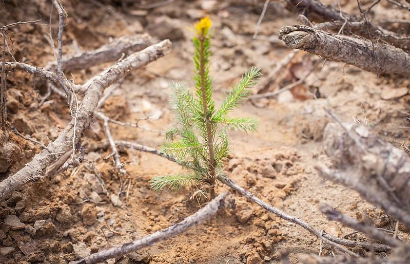 Жителей Тверской области приглашают посадить лес и выиграть деньги - новости Афанасий