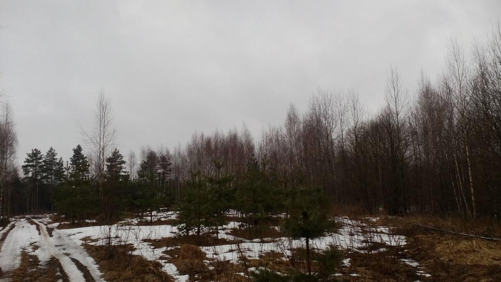 В Лихославльском районе зарастает 120 гектаров сельхозугодий - новости Афанасий